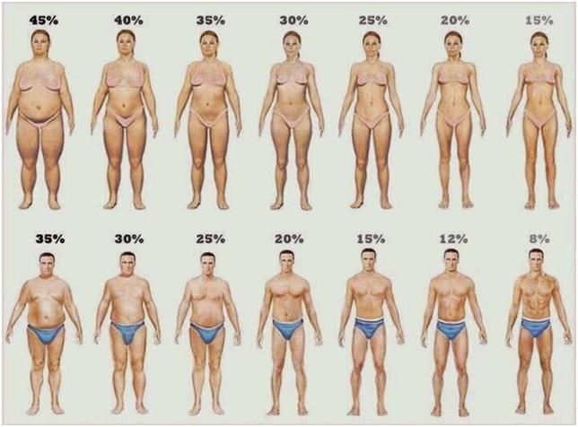 Защо се увеличава процентът на мазнините?