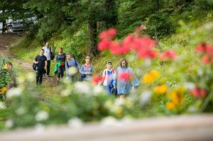 Walking among mountain flowers | LuckyFit