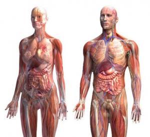 Функции в тялото   LuckyFit