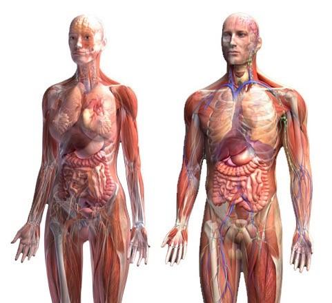 Функции в тялото | LuckyFit
