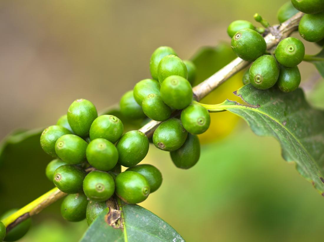 Странични ефекти от кафето   LuckyFit