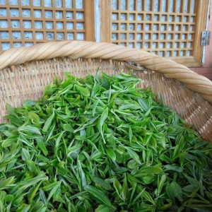 Green tea plant from China