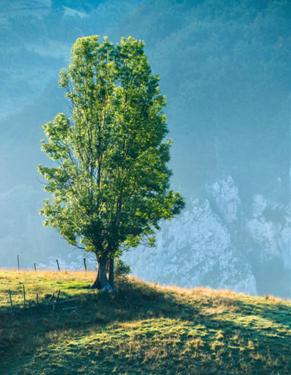 Detox for the four seasons